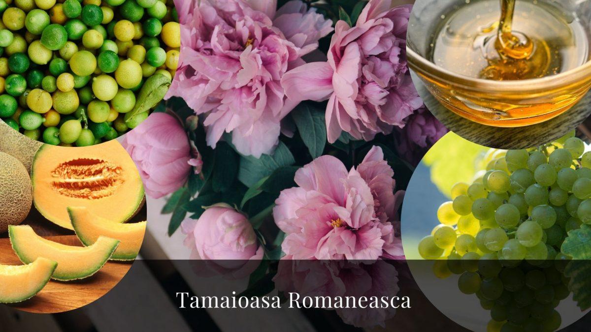 Tamaioasa romaneasca – O poveste despre cum Muscat Blanc are un nume diferit în fiecare țară